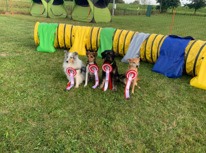Hunde-Siegerbild