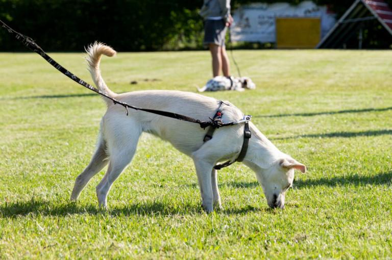 Hundeschule_Schwanenstadt_Welpen_2021-14